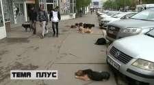 Za pet mjeseci sa ulica uklonjeno 400 pasa lutalica
