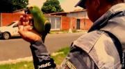 Policija uhapsila papagaja kao saučesnika narko-dilera