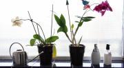 Umjesto antidepresiva, ljekari počeli da propisuju cvijeće