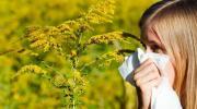 Koncentracija polena ambrozije za deceniju porasla deset puta